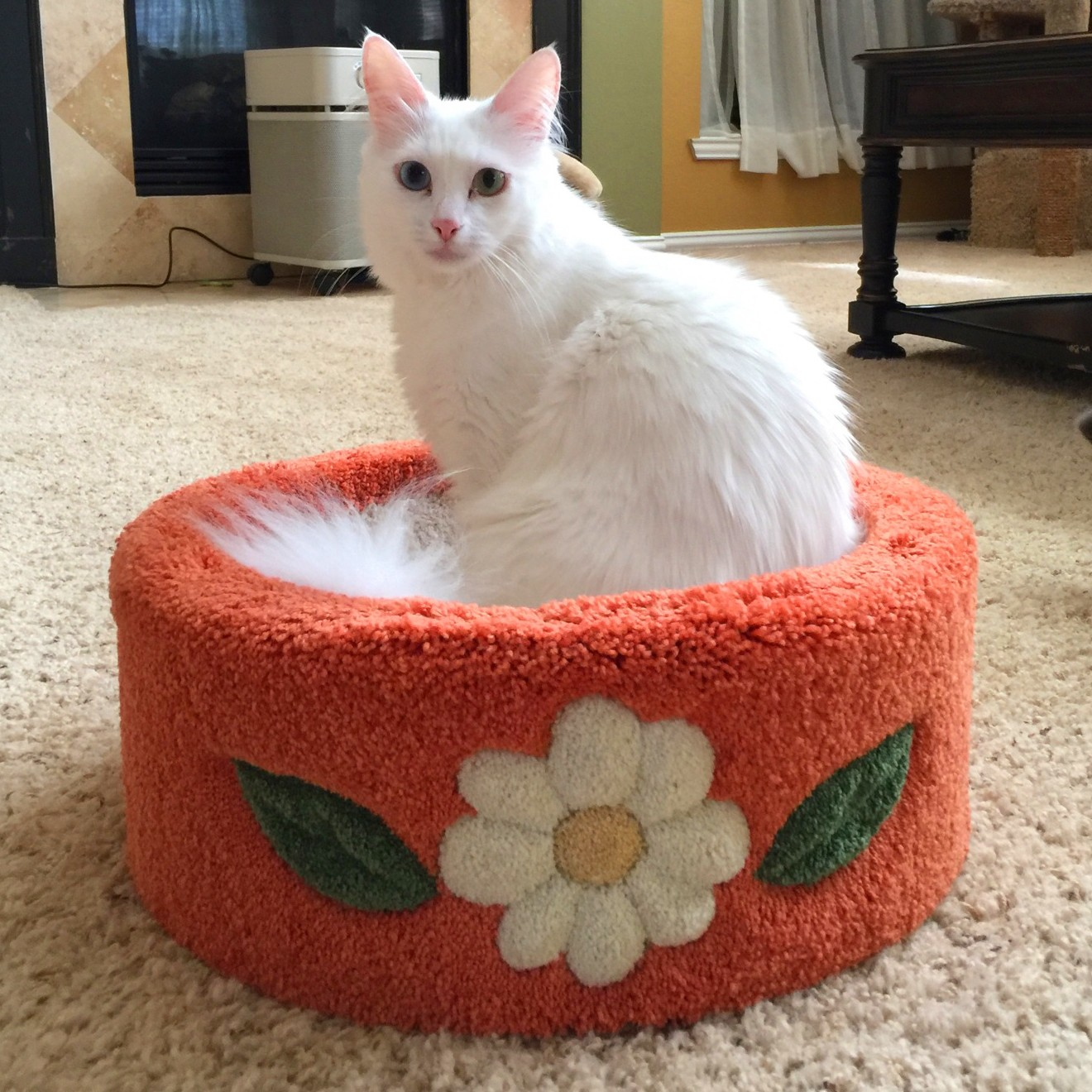 """Shown with Daisy Inlays with """"Pumpkin"""" carpet & """"Cream"""" daisy. This customer has left a review, with the title """"Superb"""". Click reviews to read Tina's review!"""
