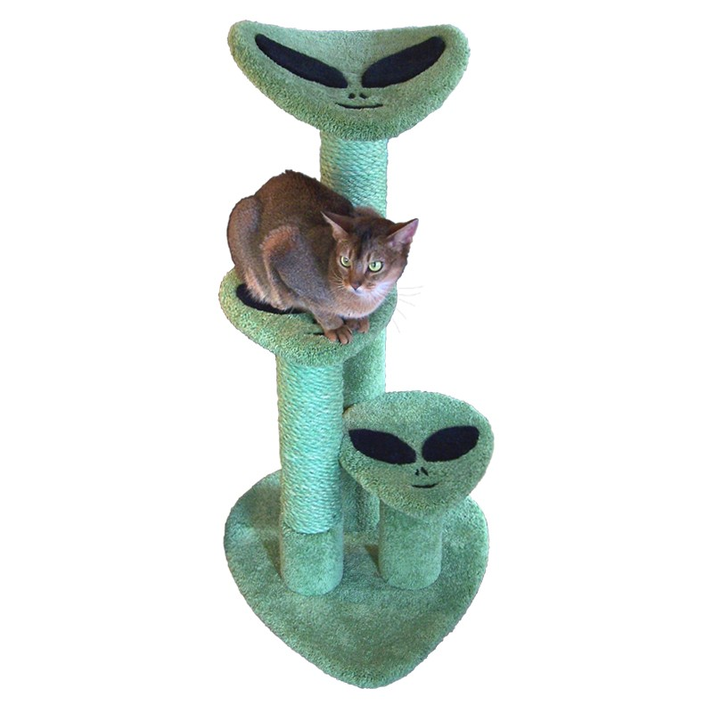 Roswell Perch