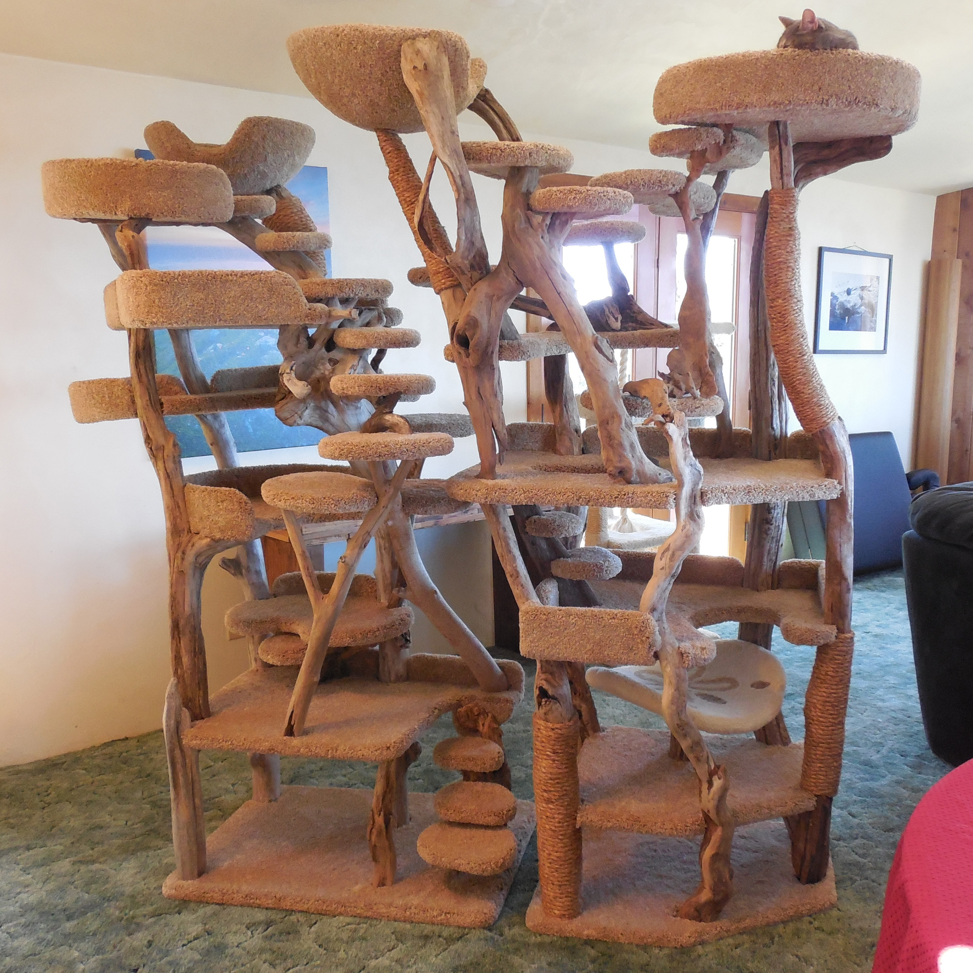 Custom Driftwood Cat Tree