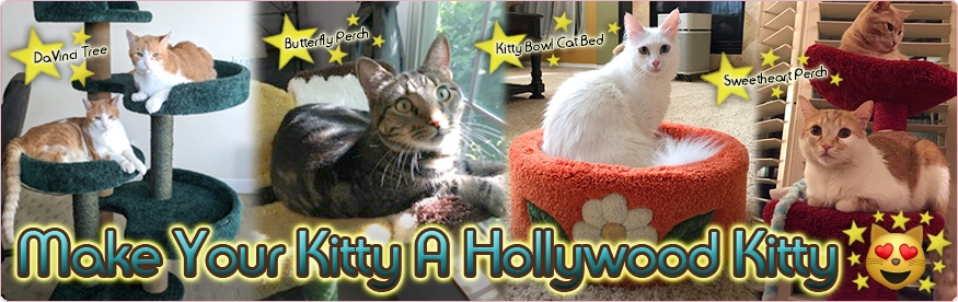 Welcome To Hollywood Kitty!